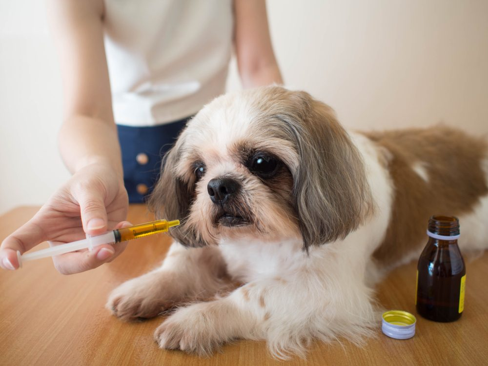 benadryl dose for dogs