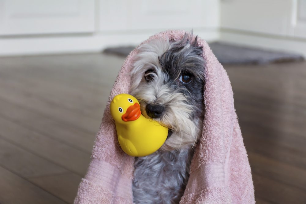 How Often Should You Wash Your dog? 10 Bathing Tips
