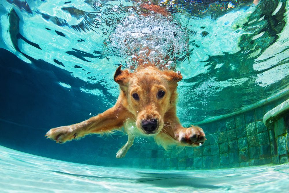 """""""Water Dogs"""": Top 13 Dog Breeds They Absolutely Love To Swim"""