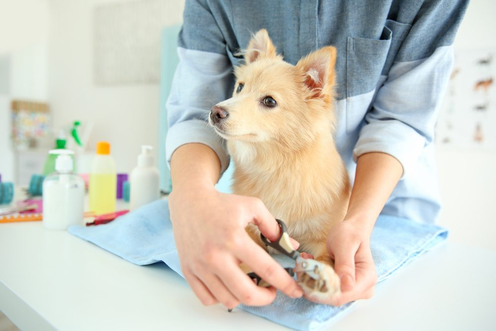 how to clip dog nails