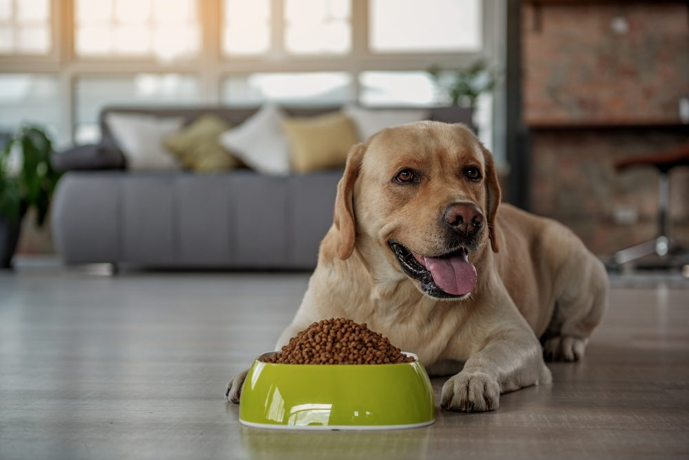Can Dogs Eat Beans? Are Beans Safe And Healthy For Dogs? [PetCare Website]
