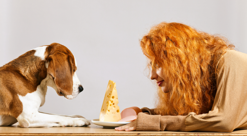 Cheese for dogs