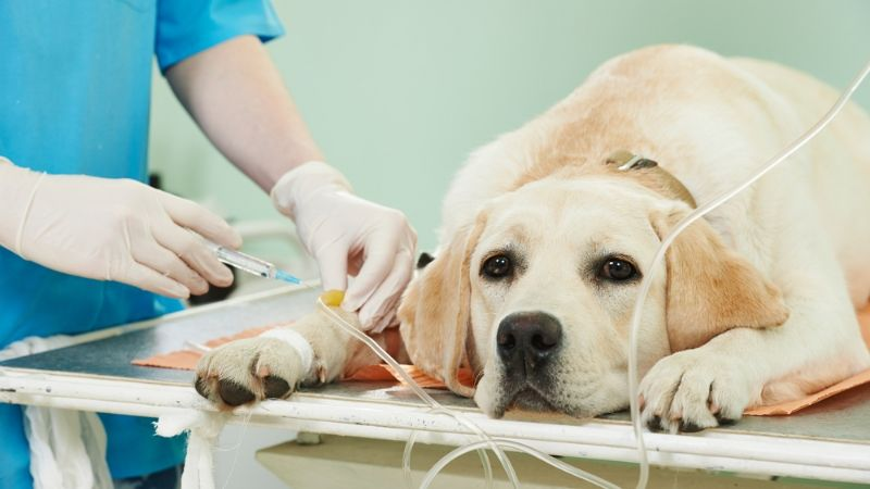 Diagnosis in dogs