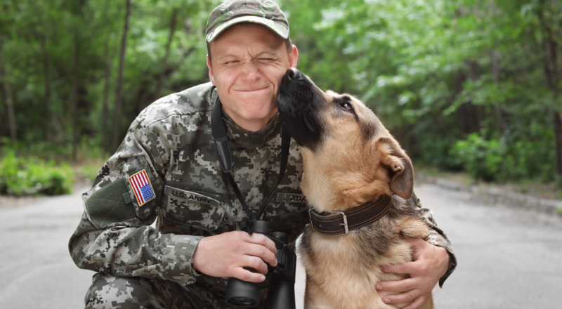Military guide pooch