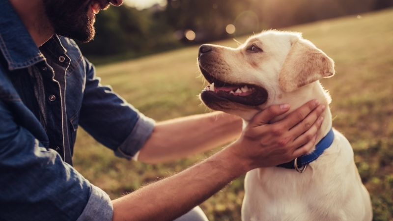 Managing Your Dog's health