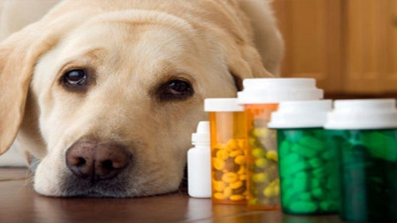 Oral Medications For dogs