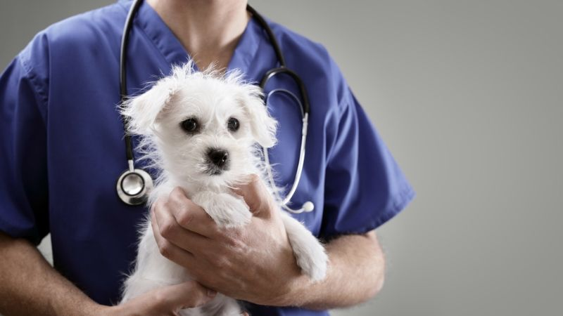 Treatment Of Diabetes In Dogs