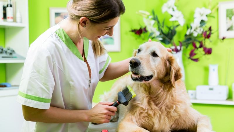 Treatment of Ringworm in Dogs