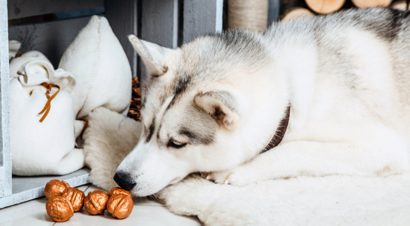 walnuts for dogs