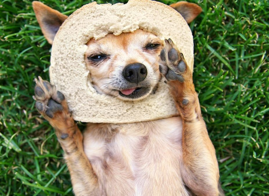 Can Dogs Eat Bread? Is It Safe & Healthy For Dogs? True Advice
