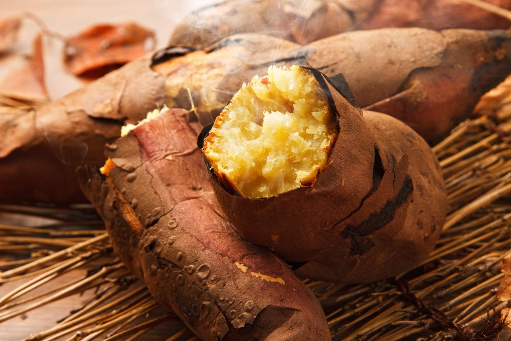 Can Dogs Eat Sweet Potatoes? Are Sweet Potatoes Healthy For Dogs