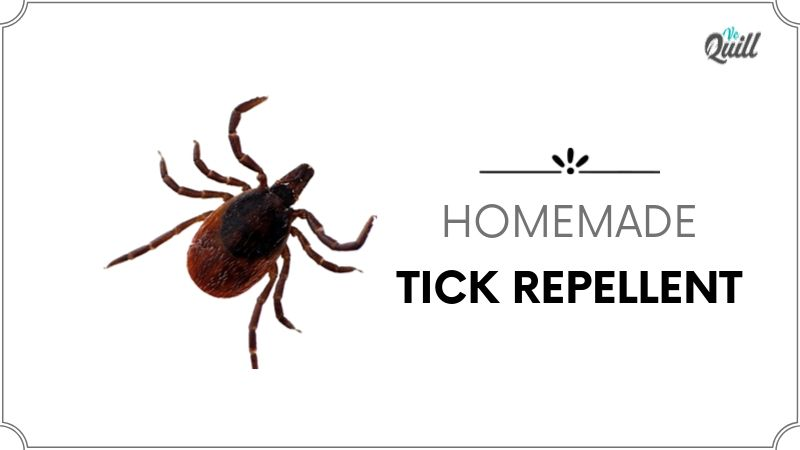 Homemade tick repellent
