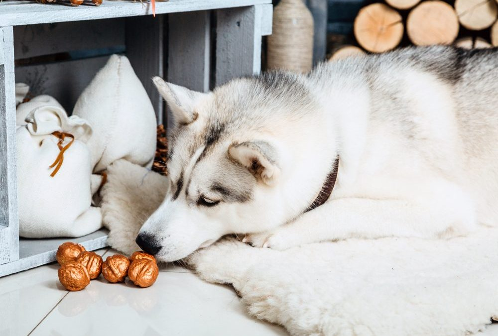 Can Dogs Eat Nuts? Are Nuts Unhealthy For Dogs? Nuts For Dogs