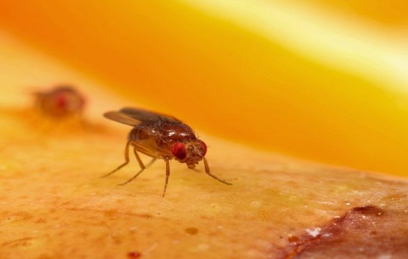 Fruit Flies In Bathroom How To Get Rid Of Fruit Flies In Bathroom