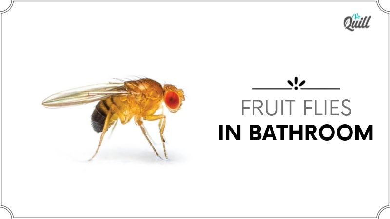 Fruit Flies In Bathroom