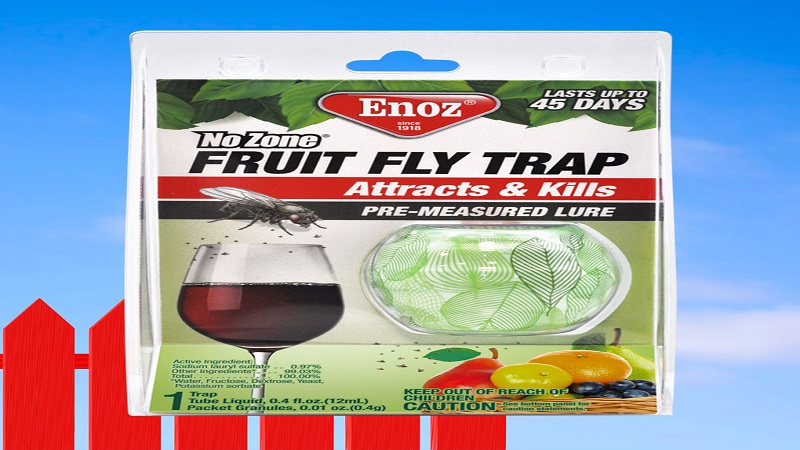 Setting Up Fruit Flies Trap