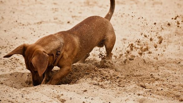 Why Do Dogs Dig - 5 Most Common Reasons For Digging