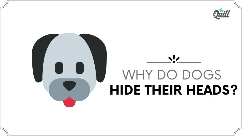 Why Do Dogs Hide Their Heads