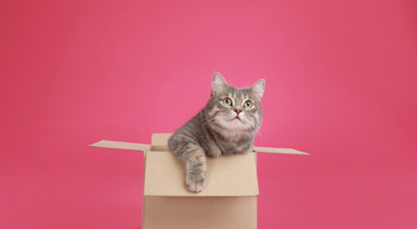 Why do cats love boxes