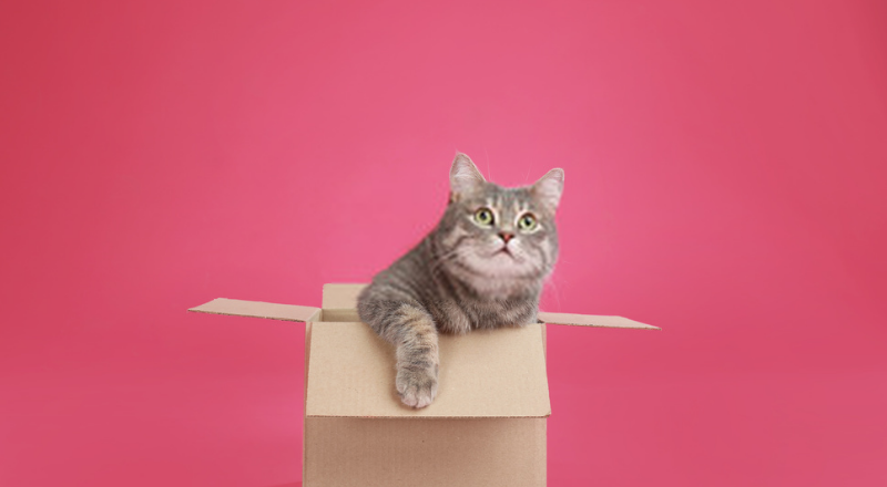 Why Do Cats Love Boxes? 7 Reasons for Cat Obsession with Boxes