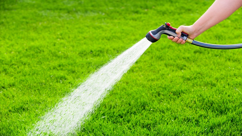 What Is The Best Time To Water Grass?