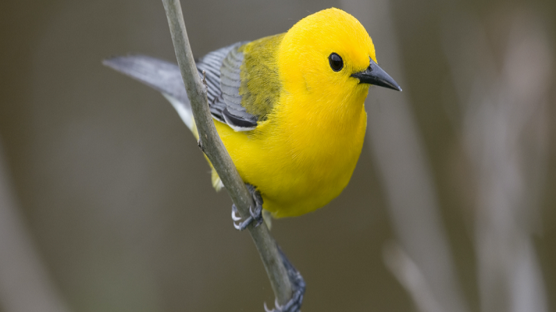 Gender Differences By Appearance, how to tell a bird's gender