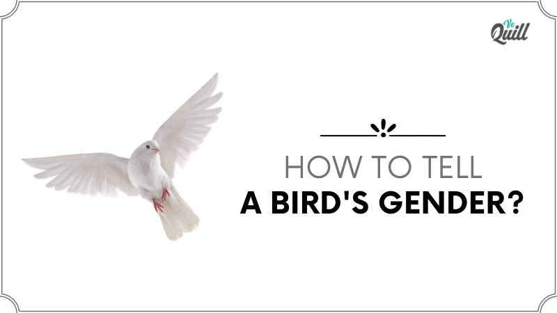 How To Tell A Bird's Gender