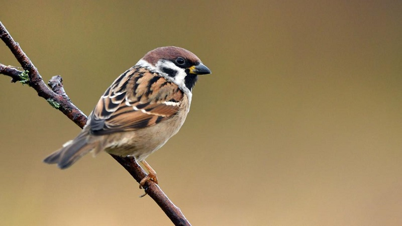 Species With Clear Difference how to tell a bird's gender