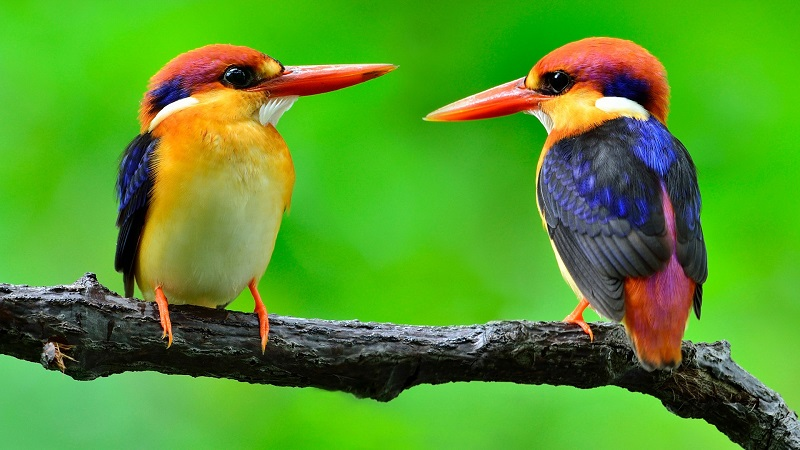 How To Tell A Bird's Gender?