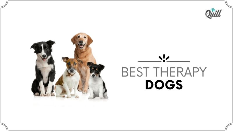 best therapy dogs