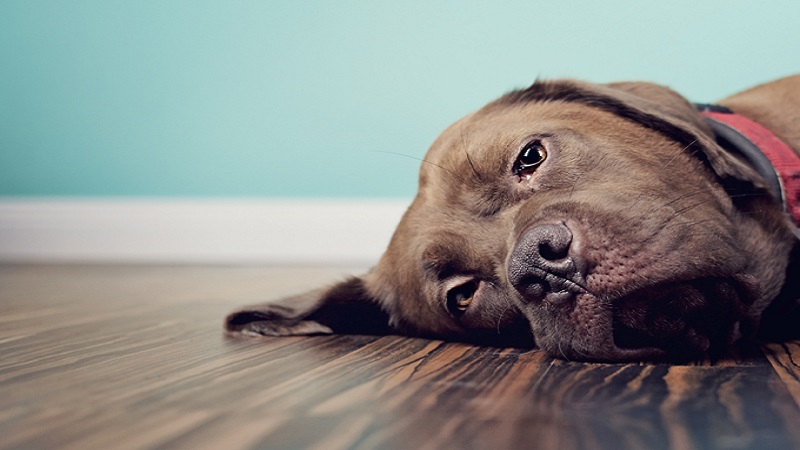 What Can I Give My Dog For Constipation?