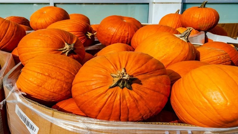 Moisture Benefits of Pumpkins