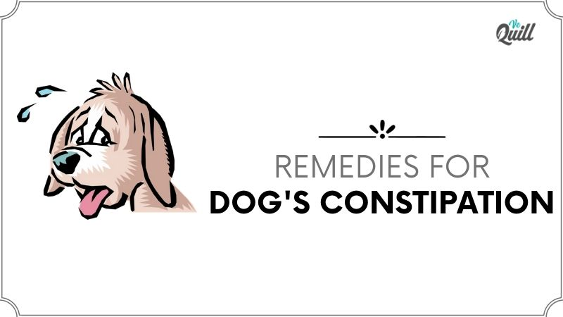 What Can I Give My Dog For Constipation