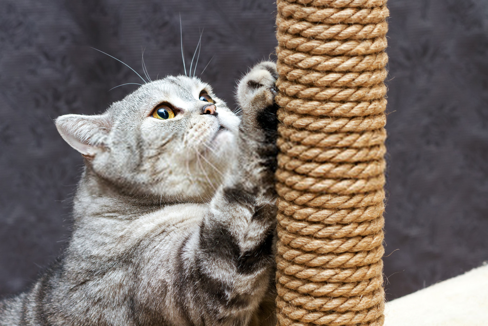 artificial posts as cat therapy