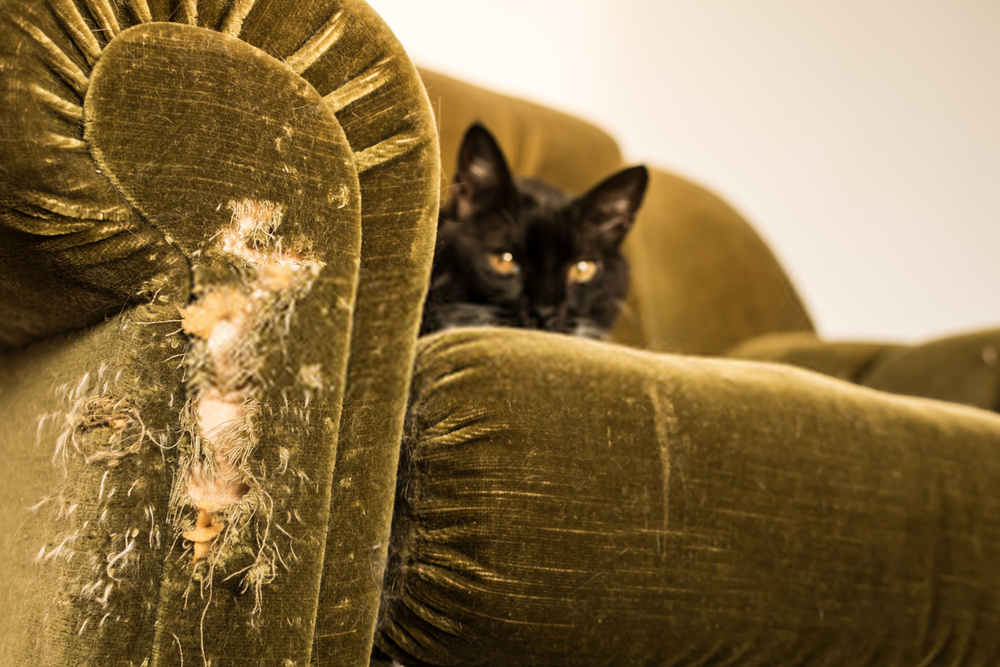 keep cats from scratching furniture