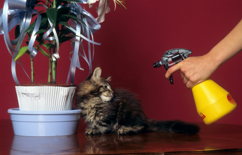 water spray for taming cats