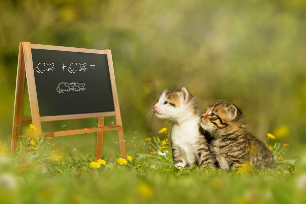 methods of cat training