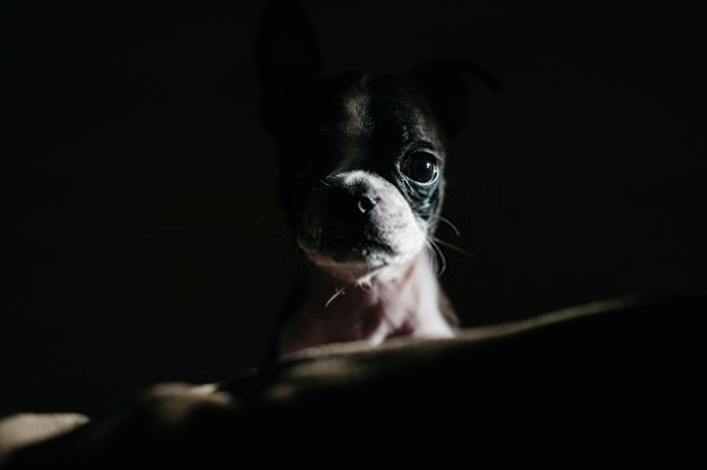 Can Dogs See Better in Dark Than Humans and Cats?