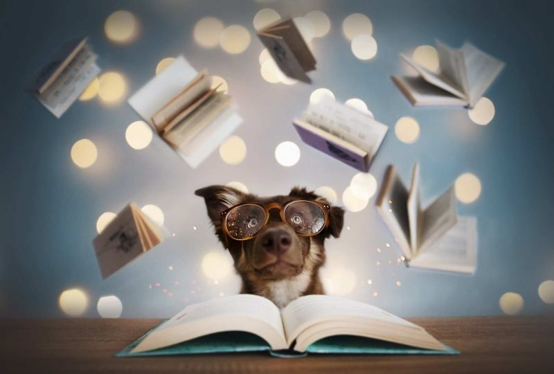 learn from dog training books
