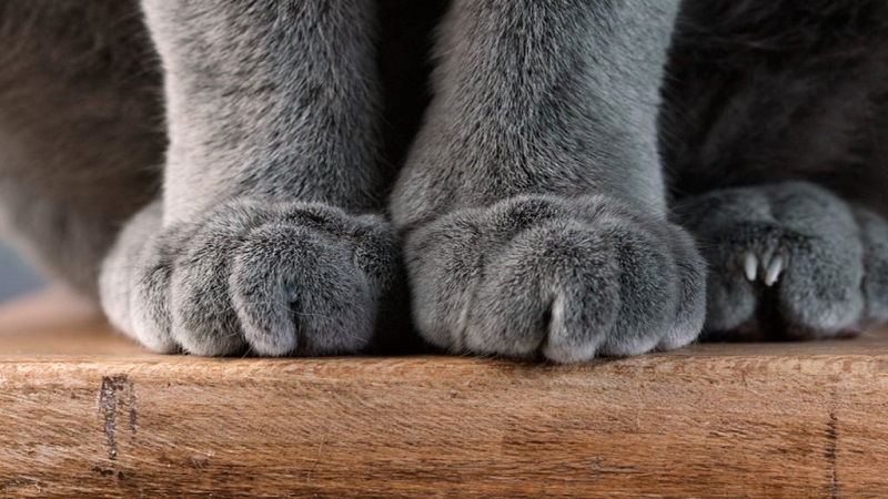 Why do cats claw