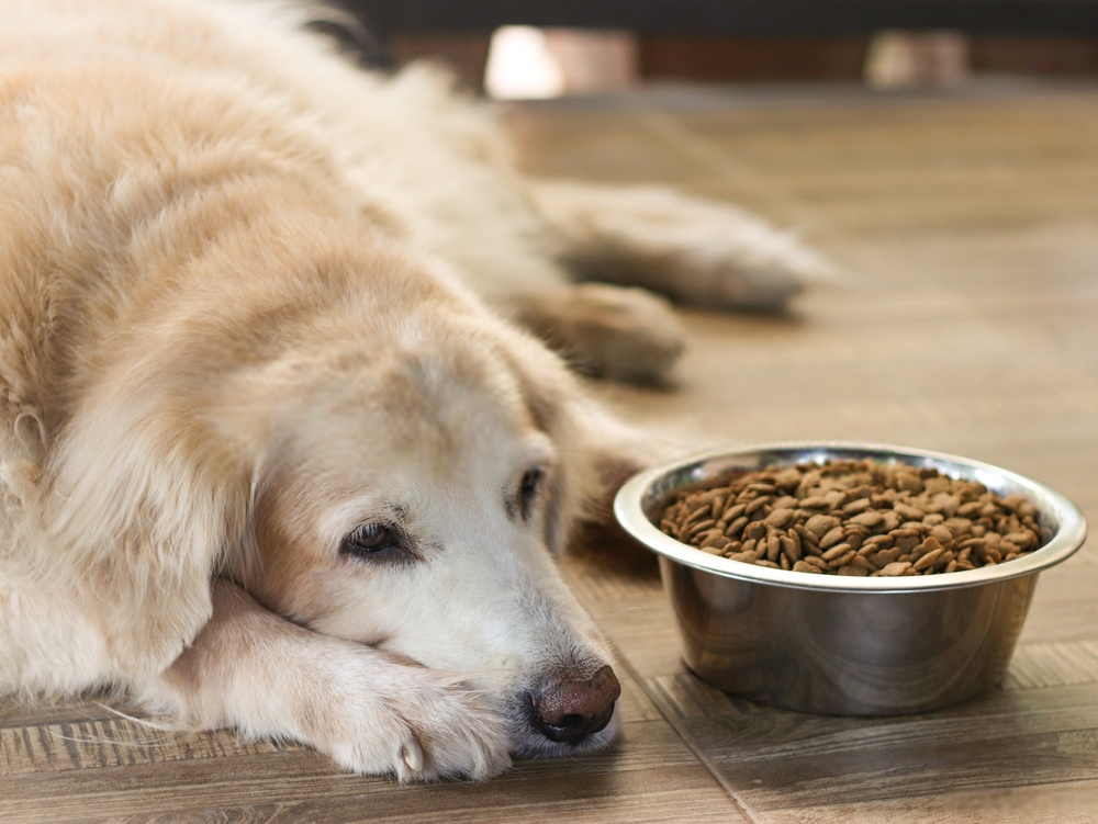 Give bland food to dog