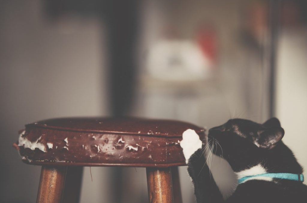 How to Keep Cats from Scratching Furniture?