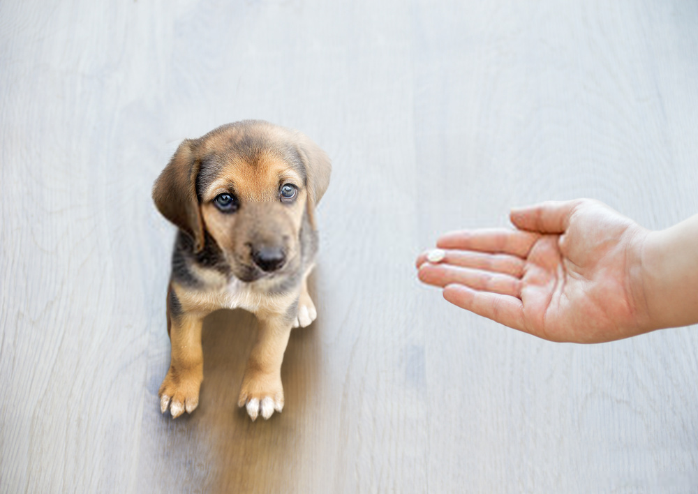 give diarrhea antibiotics to dogs
