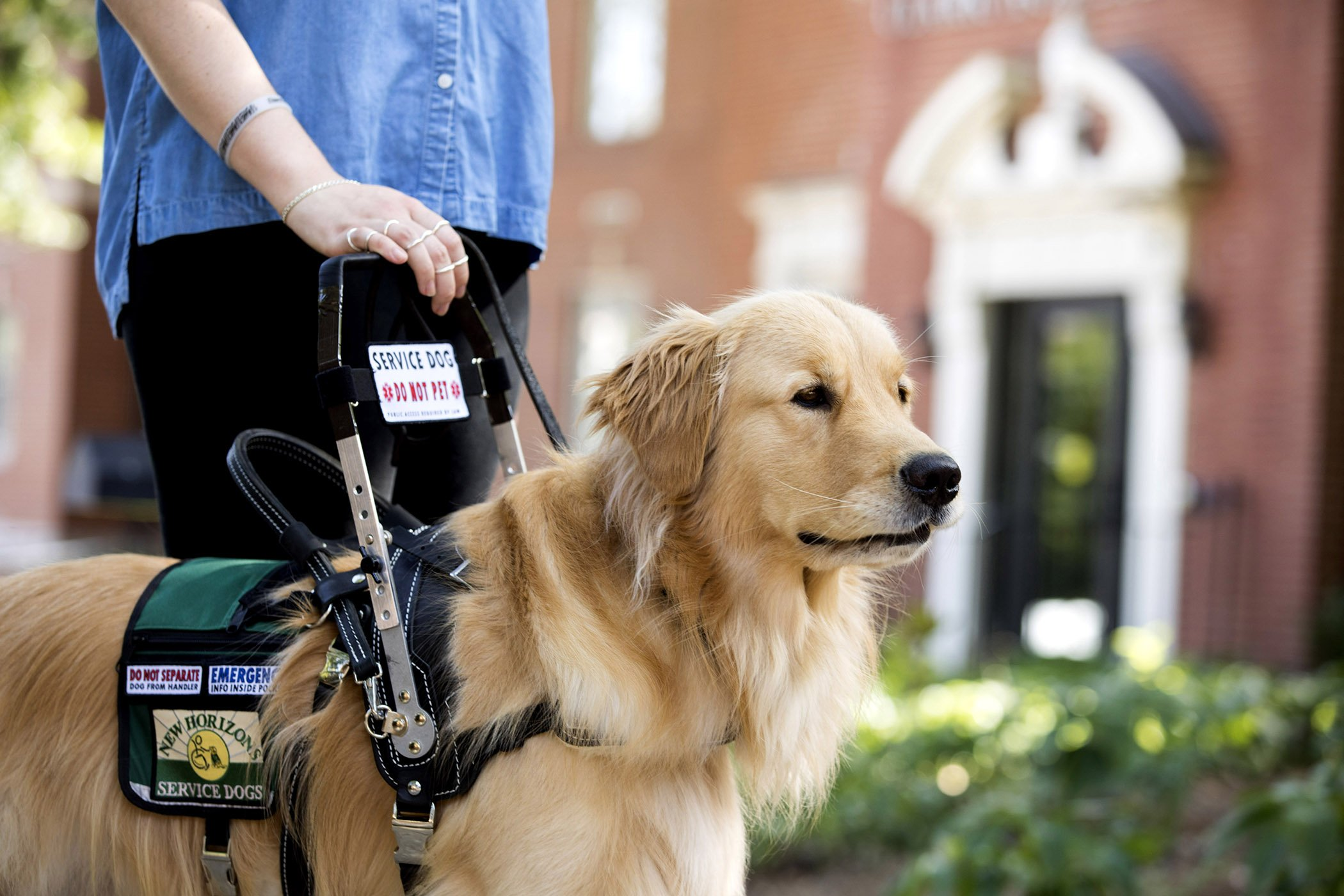 how to get a service dog for anxiety