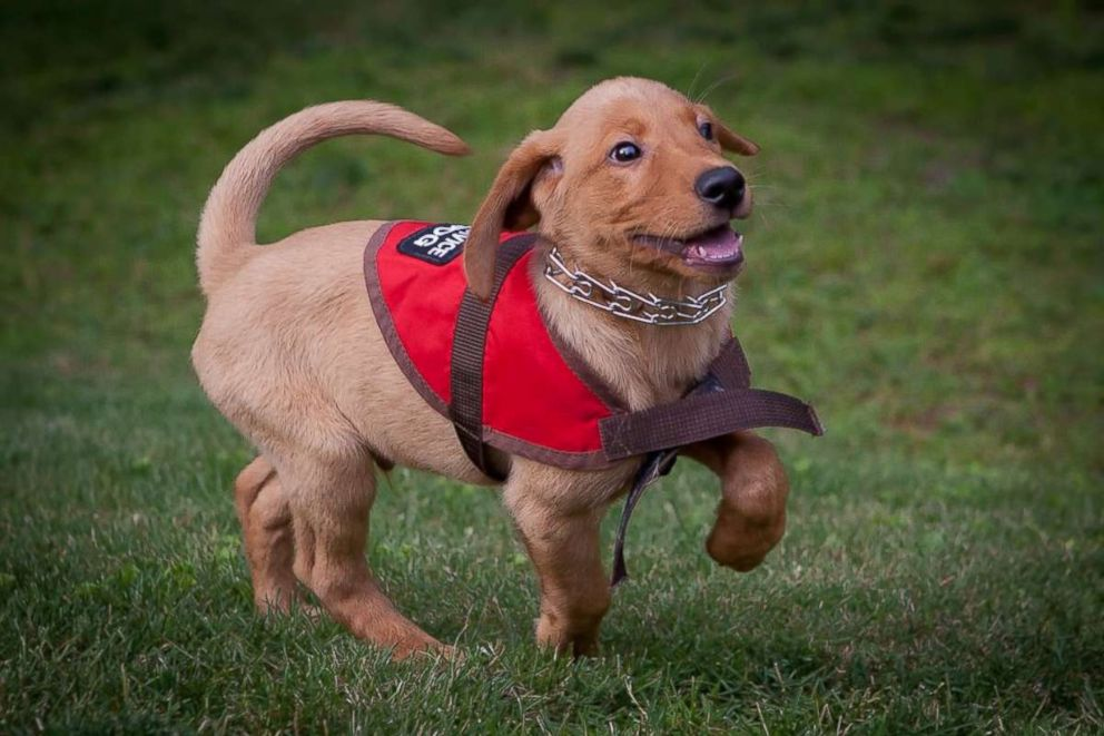 Benefits of A Service Dog for Anxiety and How to Adopt One?