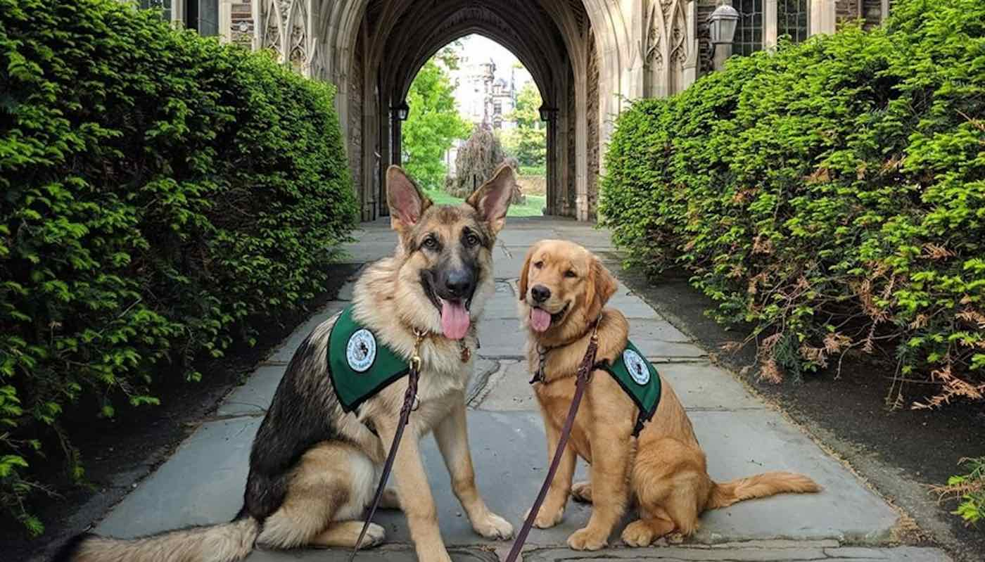 service canines as anti depressants